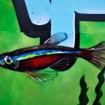 rybka, graffiti