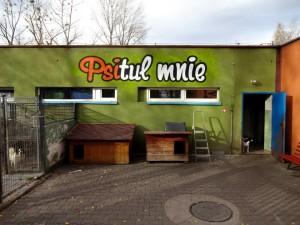 psitul mnie, graffiti